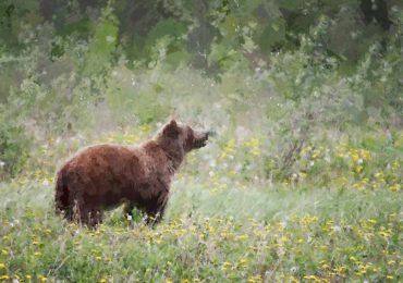 Dzikie zwierzęta wokół nas - zasady bezpieczeństwa