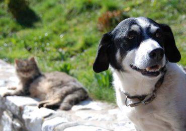 Darmowe czipowanie psów oraz kastracja i sterylizacja psów i kotów za pół ceny